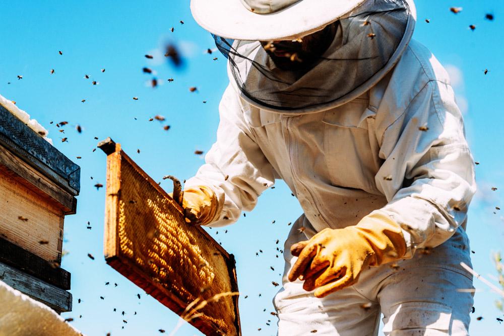 Cire d'abeille : 10 utilisations de génie à faire à la maison