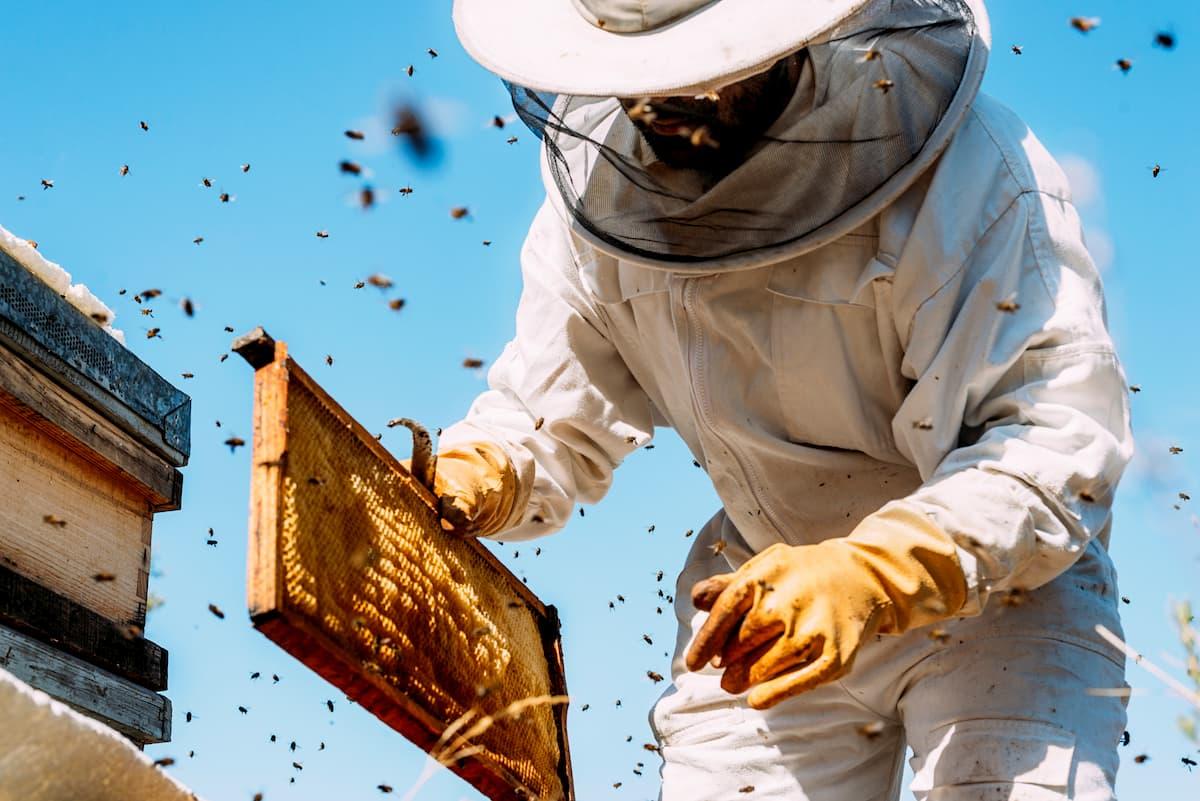 choisir une tenue d'apiculteur