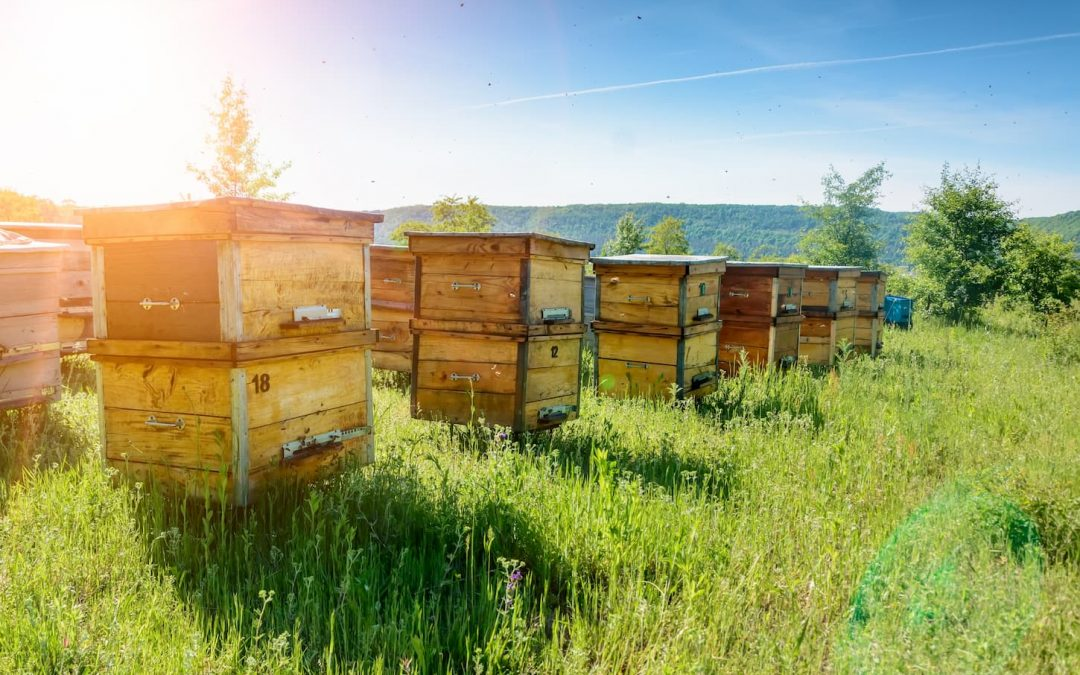 Des ruches DIY pour sauver les abeilles